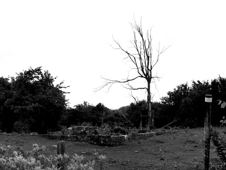 0 Blasted Tree model
